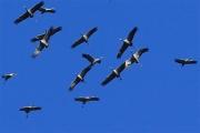 oiseaux 2013