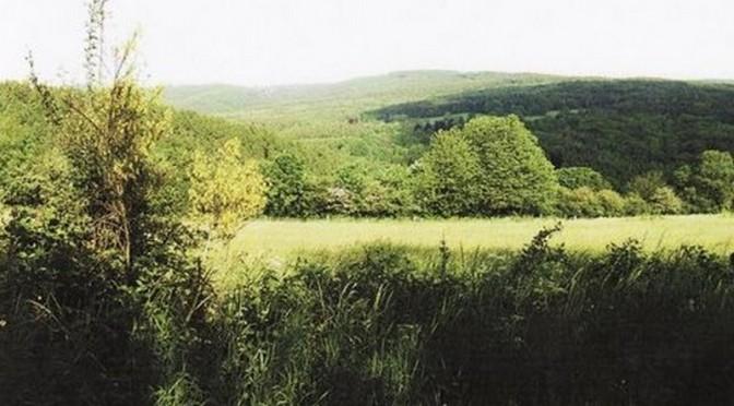 Le Bois de Harre et ses chemins