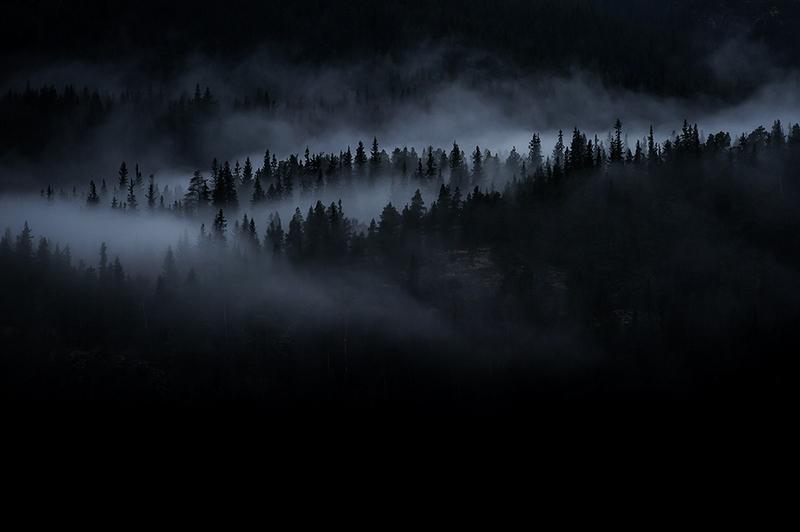 forêt_brume_R