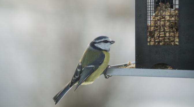 small-birds-bird-table-bird-food-bird-seed-feeding-2-jpg-1_r